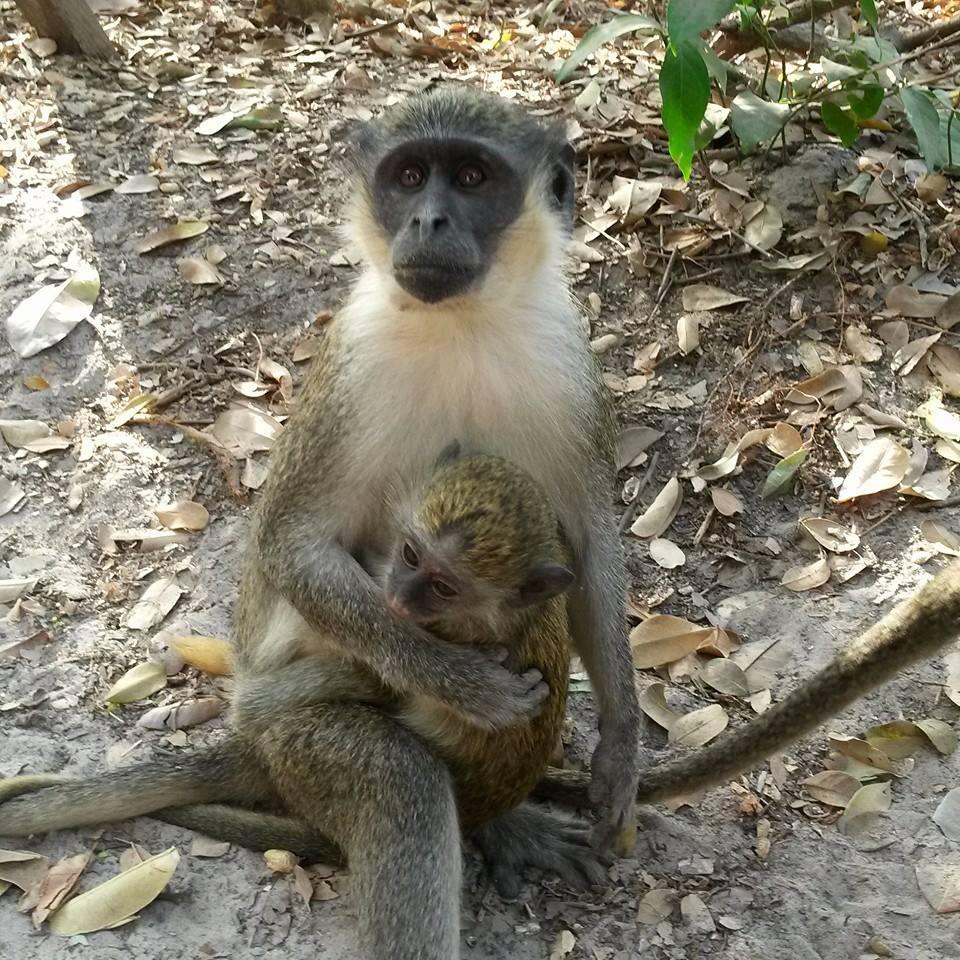 singe prostituée