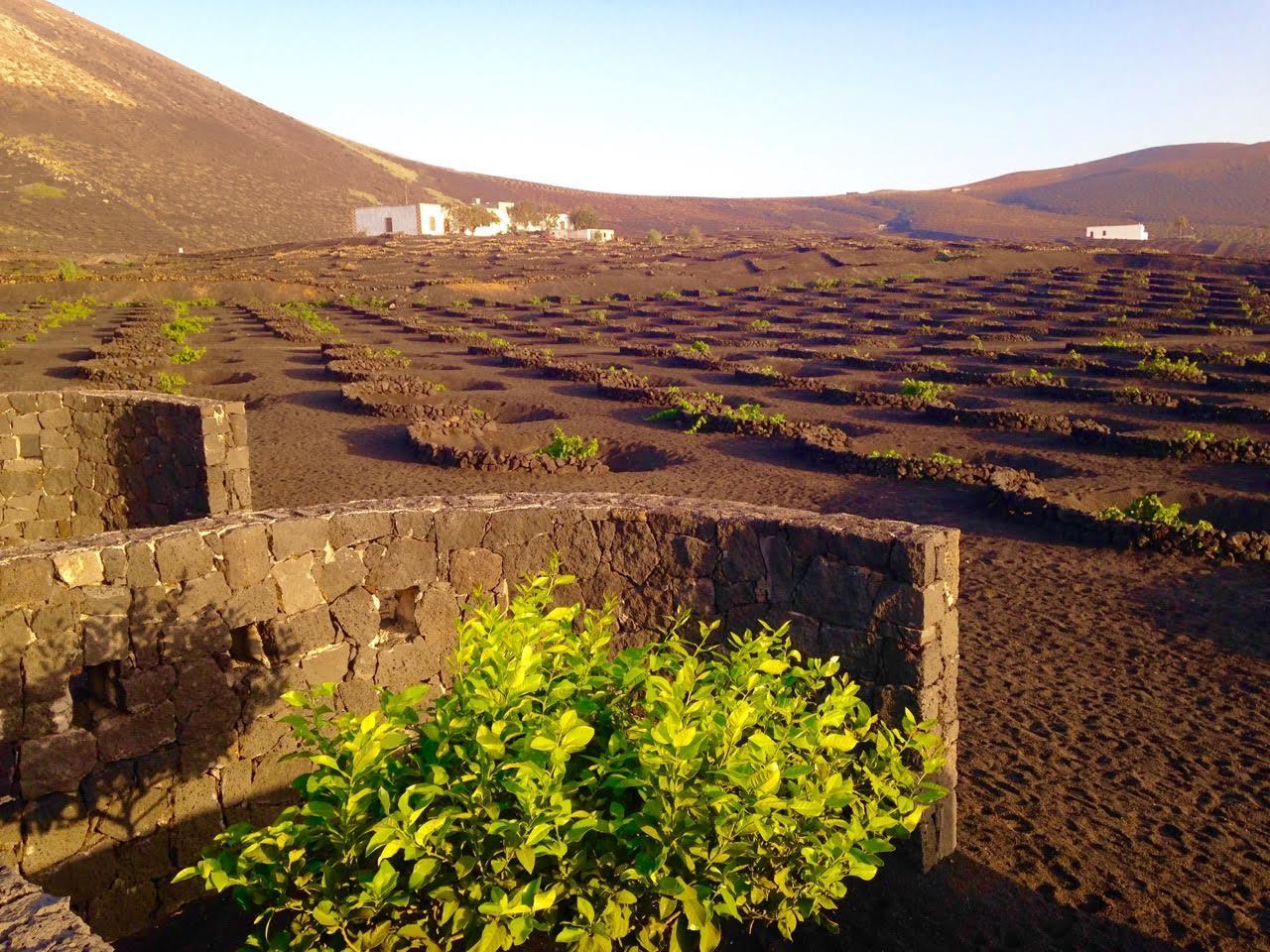 Island guide lanzarote l le volcanique biobeaubon bien tre expatriation famille et yoga - Office tourisme lanzarote ...